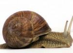 หอยทาก เป็นหอยฝาเดียวที่ไม่มีกระดูกสันหลัง ซึ่งวิวัฒนาการมาตั้งยุคดึกดำบรรพ์กว่าหลายร้อยล้านปี ปัจจุบัน หอยทาก เป็นหอยเป็นหอยที่เริ่มเข้ามามีบทบาทในด้ […]