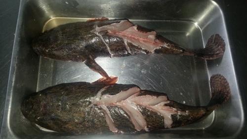 เนื้อปลาบู่
