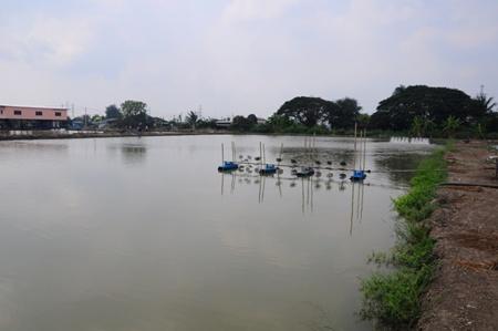 การเลี้ยงปลาในบ่อดิน