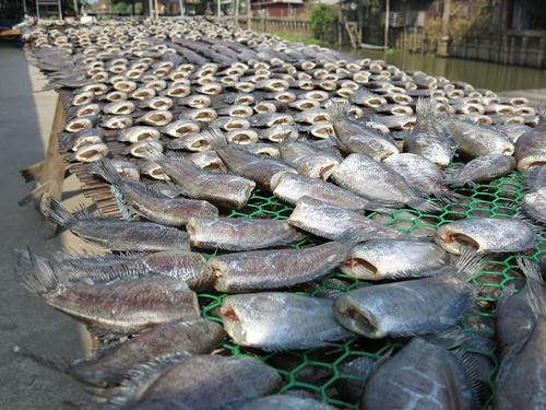 ปลาสลิดตากแห้ง1